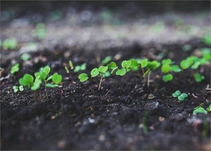 土壤和沉积物 有机氯农药的测定 气相色谱法