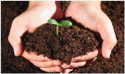 建设用地土壤污染状况调查 技术导则
